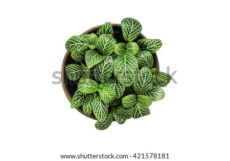 Top view of small plant pot with water drop on white background