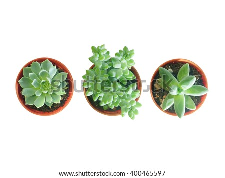 Top view of small three pot isolated #400465597