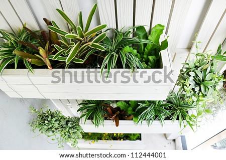 Top view of small vertical garden