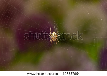 top view of spider on web with...