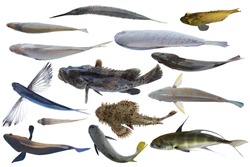 top view of swimming fish /Collection of fish