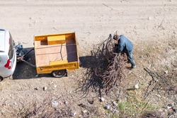 Top view of the man collecting the cut and dried braches near the car with yellow cargo trailer on cart road.