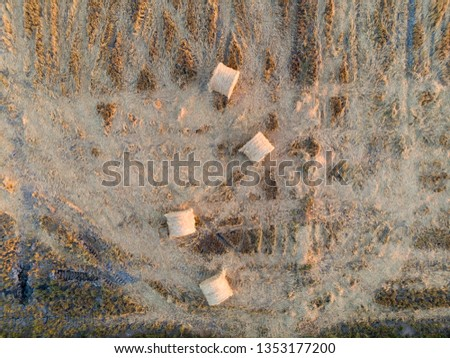 top view of the paddy hay in the paddy field #1353177200