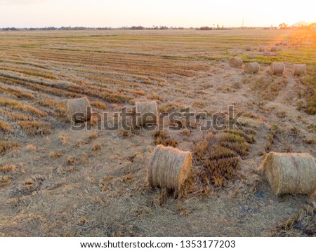 top view of the paddy hay in the paddy field #1353177203
