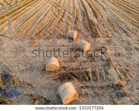 top view of the paddy hay in the paddy field #1353177206