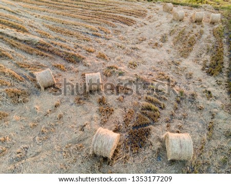 top view of the paddy hay in the paddy field #1353177209