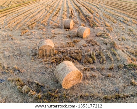 top view of the paddy hay in the paddy field #1353177212