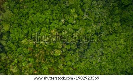 Top view of the vast amazon jungle