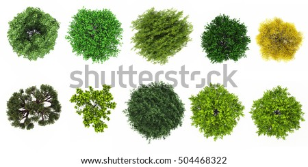 top view of tree collection isolate on white background for tree landscape 3d rendering