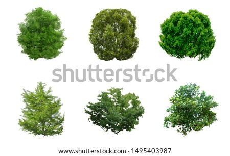 top view of tree collection isolate on white background for tree landscape. Tree top view Plan Layout on white background