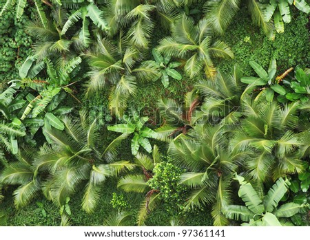 Top view of tropical forest.