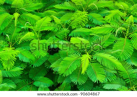 top view of tropical forest with young leaf