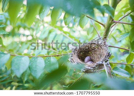 Photo of  Top view of two bird eggs inside their nest on tree branch. bird nest with two eggs. Life just begin. Two bird eggs in nest on branches of tree.