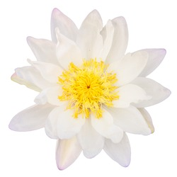 Top view of White lotus flower isolated on white background.