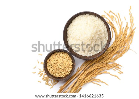 Top view of white rice and paddy rice in wooden bowl with rice ear isolated on white background.