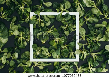 top view of white square frame and beautiful fresh green leaves  #1077032438
