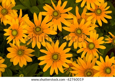 Top view of yellow flowers