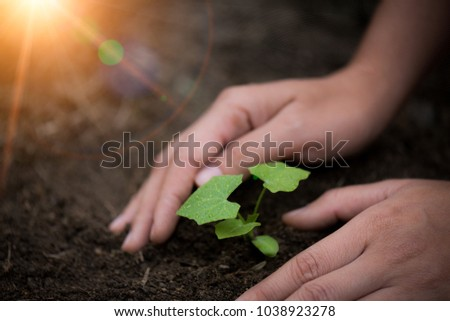 Top view of young tree with soil in background. Earth Day concept.