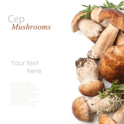 Top view on cep mushrooms with fresh thyme over white with sample text