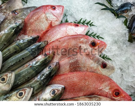 Top View on Multiple Rows of Various Raw Freshly Caught Fishes on Ice for Sale at Fish Market. Fresh Tropical Seafood in the Market. A Variety of Cold Fish Stacked. Many Fishes in Refrigerator