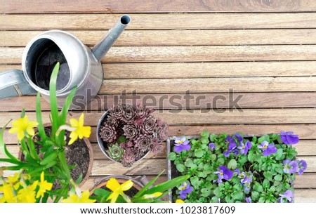 top view on springtime flowerpots on a wooden terrace