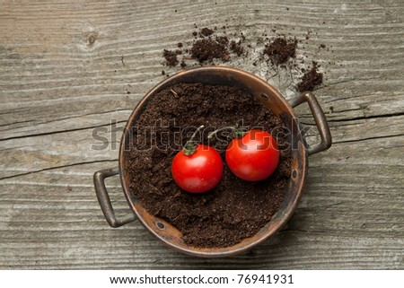 Top view on tow fresh cherry tomato on the ground in old metal bowl