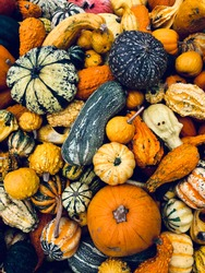 Top view on various colorful decorative gourds.  Variety of small decorative pumpkins. Autumn and Helloween concept.