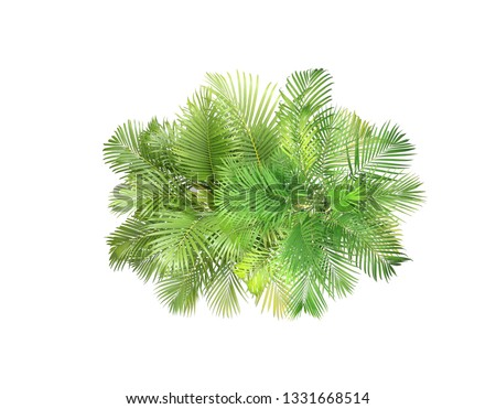 top view palm leaves tree isolated on white background #1331668514