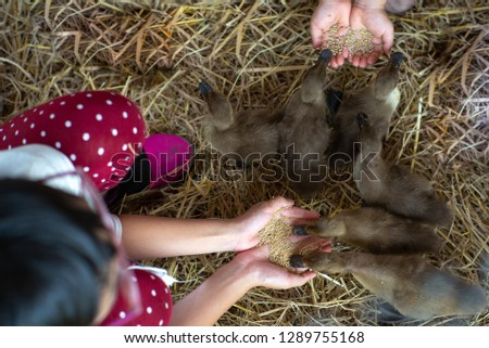 Top view picture of children feeding the duckling some food with dries straw in background.