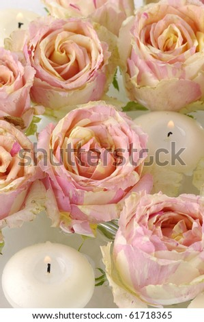Top view pink rose and candle background