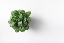 Top view plant in pot isolated on white desk background