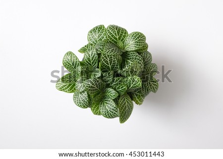 Top view plant in pot isolated on white desk background #453011443