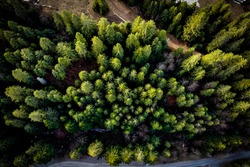 Topdown view of treetops from drone