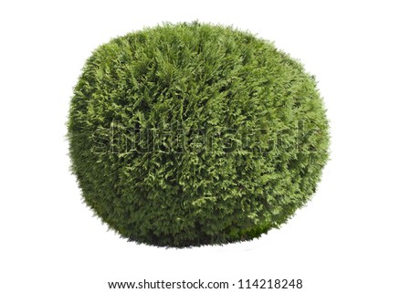 Topiary bush isolated over white background