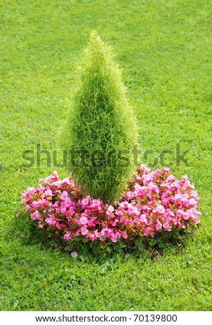 Topiary bush with begonia flowers