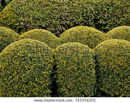 Topiary  the art of creating sculptures in trees, shrubs and sub-shrubs. #761056201