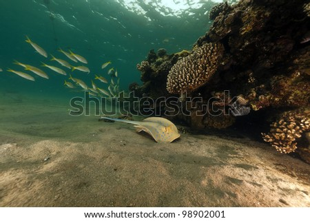 Topical fish and coral in the Red Sea