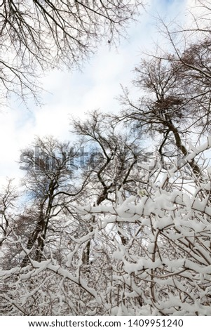 tops of deciduous trees in the winter season. Covered with snow after snowfall. Sky in the background #1409951240