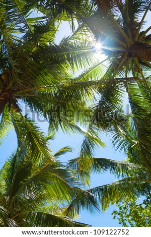 tops of palm trees in the jungle and shining sun through palms