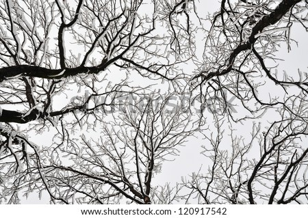 Tops of the trees in a park