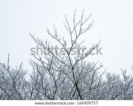 Tops of Trees Covered in Ice after Ice Storm