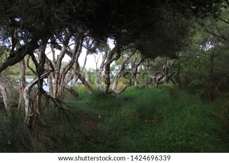 Torbay campsite, beautiful area with nature, australia, outback #1424696339