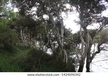 Torbay campsite, beautiful area with nature, australia, outback #1424696342