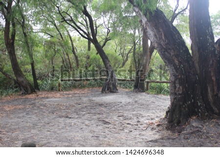 Torbay campsite, beautiful area with nature, australia, outback #1424696348