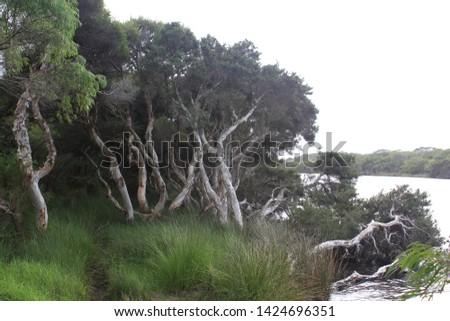 Torbay campsite, beautiful area with nature, australia, outback #1424696351