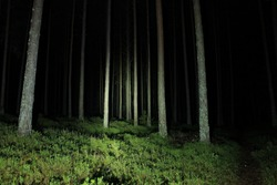 Torch lighted forest at night. Pine forest with green ground. An uncomfortable atmosphere and fear of the unknown and darkness. Day of the dead in dark. Halloween mood in a place where people get lost