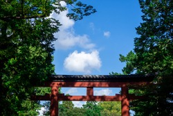 Torii gate and leaves of trees at Hikawa Shrine on a sunny day