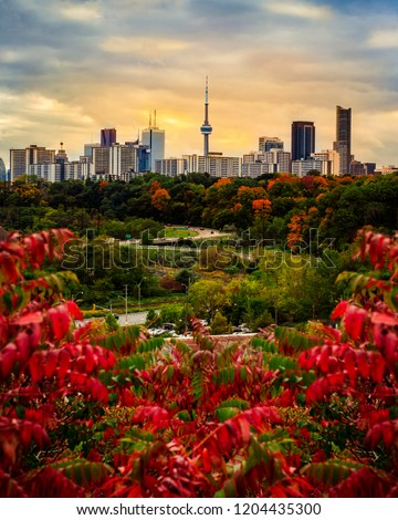 TORONTO CITY SKYLINE IN FALL - Beautiful sunset scene of Toronto in fall/autumn with colorful trees. Gorgeous rare seasonal image of city landscape with red and orange colors. Toronto, Ontario, Canada