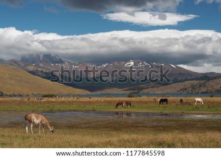 Torres del Paine Blue Lagoon #1177845598