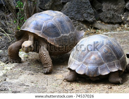 Tortoise Highway - Galapagos Islands